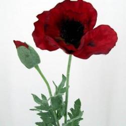 Oriental Silk Poppy Scarlet - P008 J4