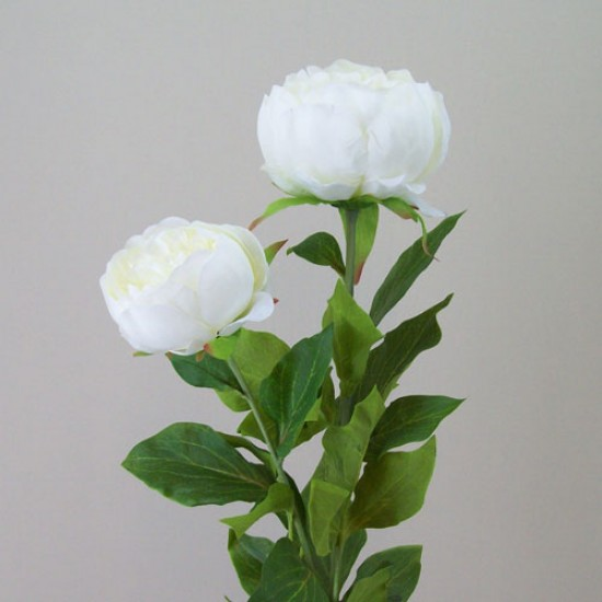 Double Peony Flowers Cream - P144 L4