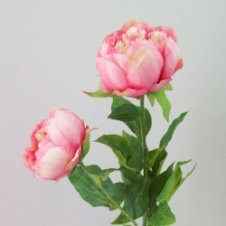 Double Peony Flowers Pink Peach - P146 L4