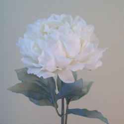 Artificial Peony Flowers Oyster Cream - P216 BX15