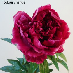 Real Touch King Peony Magenta - P079 L4