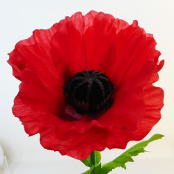 Giant Supersized Artificial Poppy | VM Display Prop - P092 PR