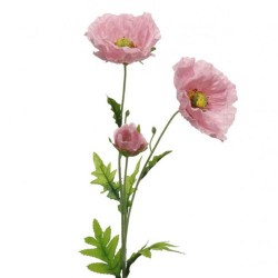 Wild Poppies Pink - P074 K3