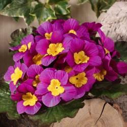 Artificial Primula Plants Pink - P028 J3