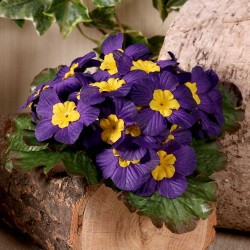 Artificial Primula Plants Purple - P034 K4