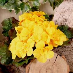 Artificial Primula Plants Yellow - P038 J3