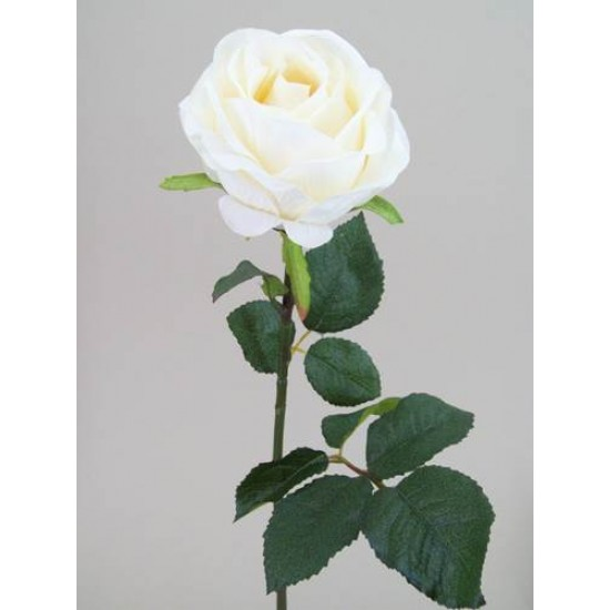 Prize Rose Cream - R161 N4