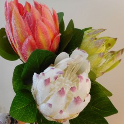 Artificial King Protea Green - P272 HH4