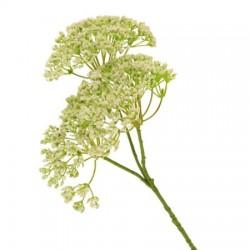Artificial Queen Anne's Lace Flowers Cream - Q004 L2