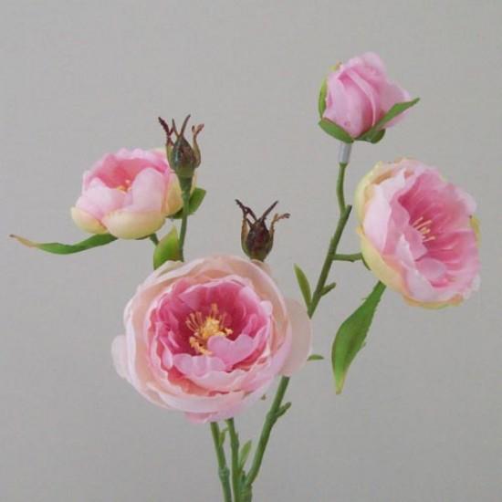 Ranunculus Flowers Pink Open - R427 R2