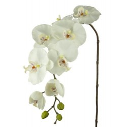 Real Touch Phalaenopsis Orchid Ivory - O049 K1