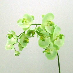 Real Touch Phalaenopsis Orchid Lime Green - O054 I4