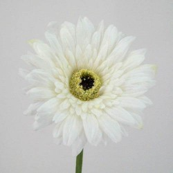 Real Touch Silk Gerbera Ivory Cream - G046 F2