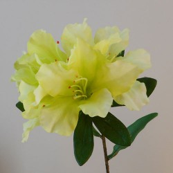 Carnival Rhododendron Lime Green - R904 LL2