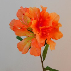 Carnival Rhododendron Orange - R902 M1