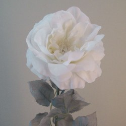 Blown Roses Oyster Cream - R864 KK1