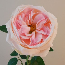Artificial Cabbage Rose Pale Pink 60cm - R761 N4