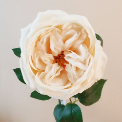 Artificial Cabbage Rose Cream 60cm - R762 L2