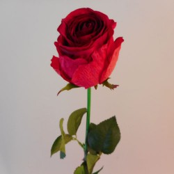 Belgravia Rose Scarlet Red - R088 L4