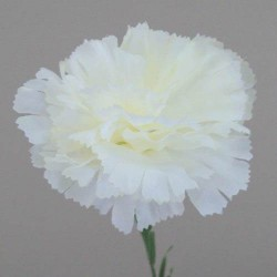 Silk Carnations Cream - C001a A4