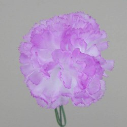 Silk Carnations Mauve Purple - C001b A4