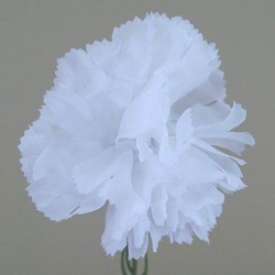 Silk Carnations White - C001i A4
