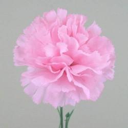 Silk Carnations Pink - C001d A4
