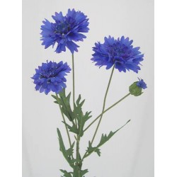 Artificial Silk Cornflowers Large Blue - C019