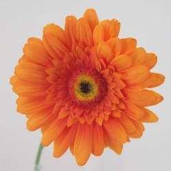 Silk Gerbera Orange - G020 F2