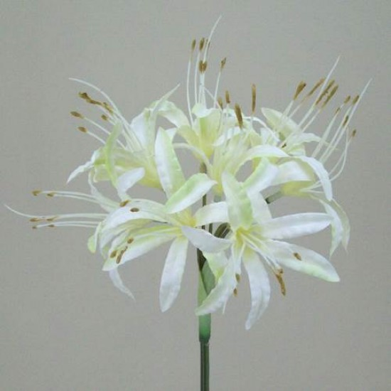Silk Nerine Lily Cream with a hint of Green - N005 J3