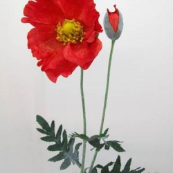 Giant Oriental Poppy Bright Red - P029 KK1