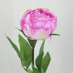 Peony Flowers Antique Pink - P002a K3