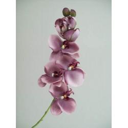 Vintage Phalaenopsis Orchid Purple - O045 J4