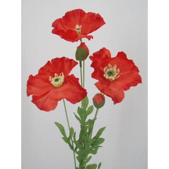 Red Poppies - P017 K3