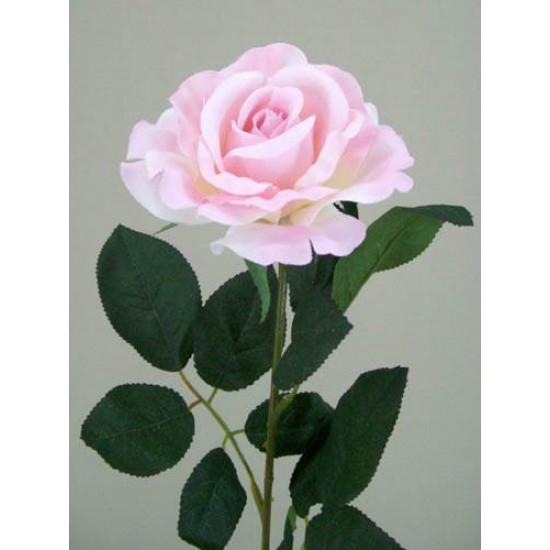 Premium Roses Pink - R014e L3