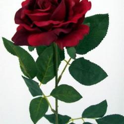 Premium Roses Red - R014c L3
