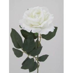 Premium Roses White - R014b L3