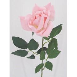 Pale Pink Tea Rose - R035 O4