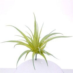 Artificial Succulents Senecio Light Green 9cm - SUC027 FF2