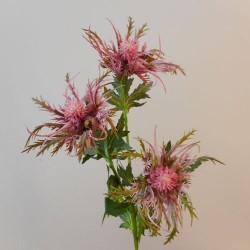Wild Sea Holly Thistles Pink - E020 E4