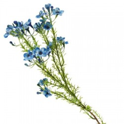 Artificial Wax Flowers Blue - W046 T3