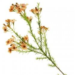 Artificial Wax Flowers Peach - W047 T3
