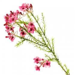 Artificial Wax Flowers Pink - W048 T3