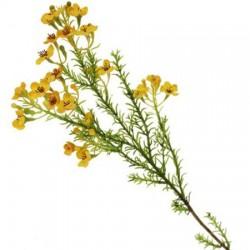 Artificial Wax Flowers Yellow - W045 BX13